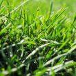 除草剤を家庭菜園で使った影響は?土壌への残留と入れ替え費用